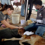 Anushka Sharma takes care of Animals